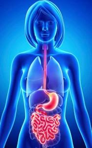 miami-acupuncture-digestive-health